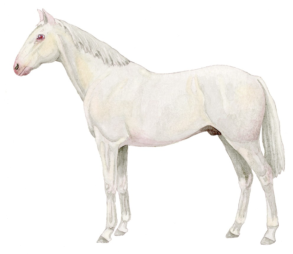 M_049_albino