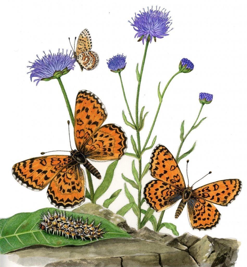 papallona011